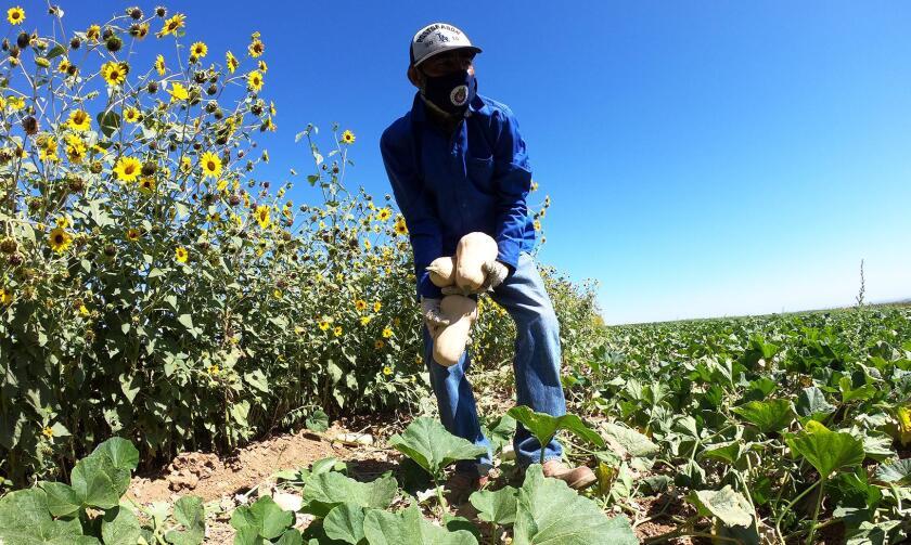 A Fresno-area politician wants California to prioritize struggling San Joaquin Valley farmworkers