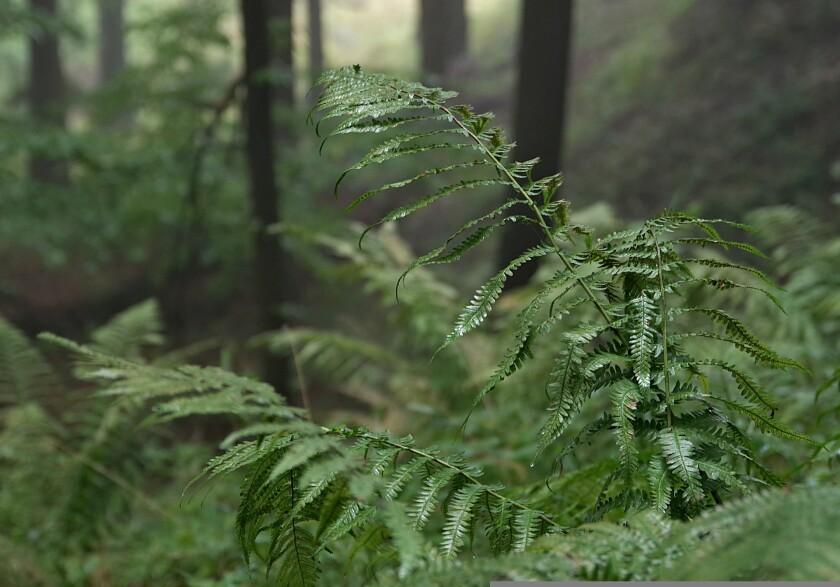 drops of water on a fern leaf