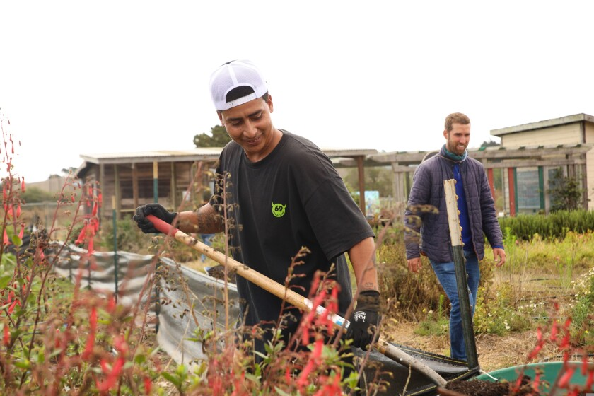 Darren Cocroft works the fields at the Homeless Garden Project in July 2021.