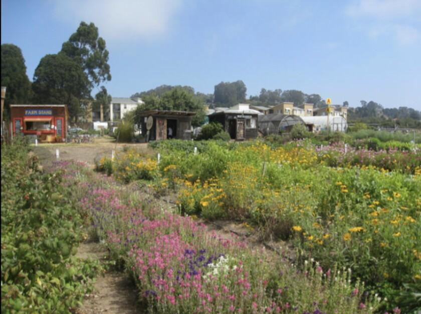 The Homeless Garden Project farm at Natural Bridges