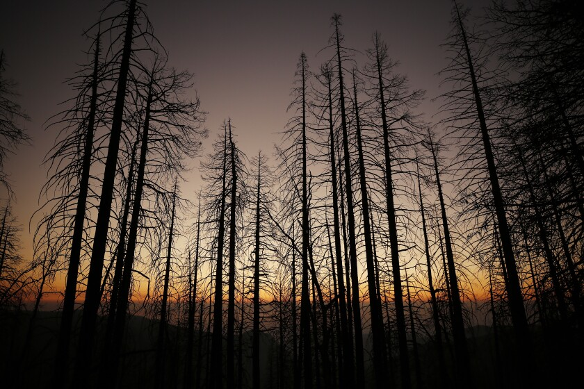 Sunset obscured by smoke-filled skies near Alder Creek Grove where Sequoia trees had grown on this Sierra Nevada ridgetop