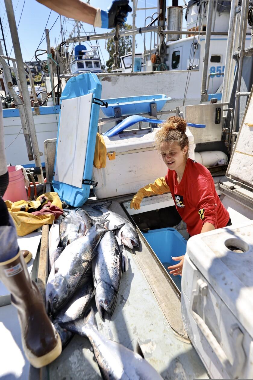 Cybelle Priestley unloads freshly caught salmon in the Santa Cruz Harbor on Monday.