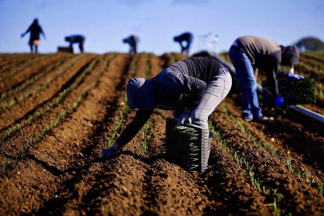 Farmworkers at Lakeside Organic on Tuesday, Jan. 26.