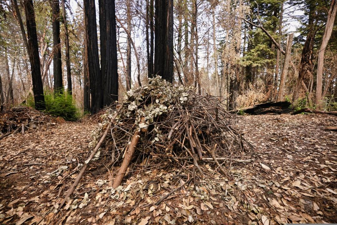 A burn pile.