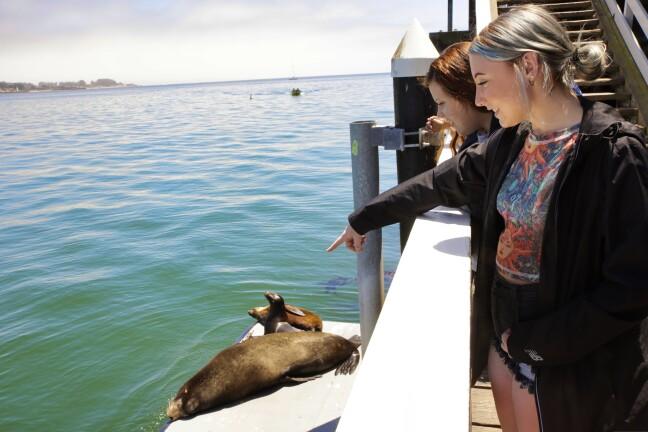 Sea lions on the Santa Cruz Wharf.