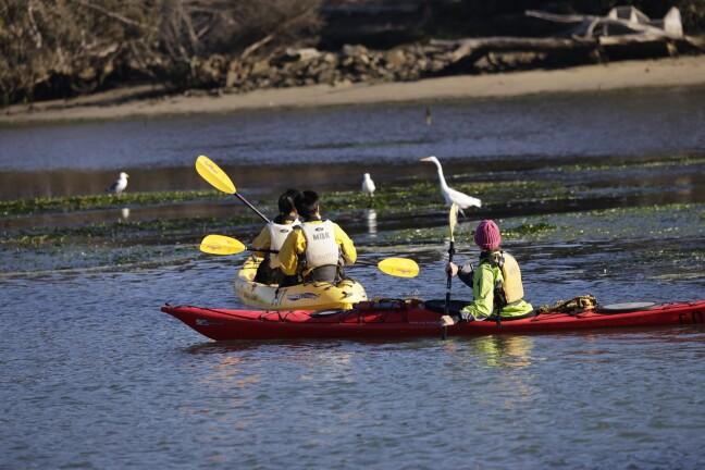 Kayaking Elkhorn Slough.