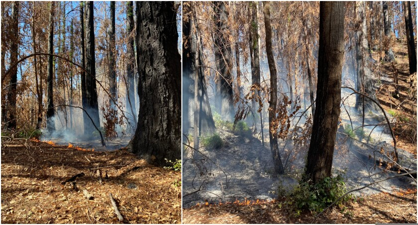 Crews to mop up 11.5-acre blaze in Big Basin Tuesday.
