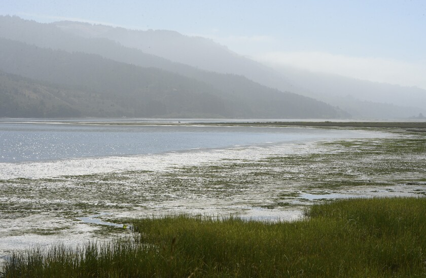 The Bolinas Lagoon on July 29, 2019. Photo by Alan Dep, Marin Independent Journal