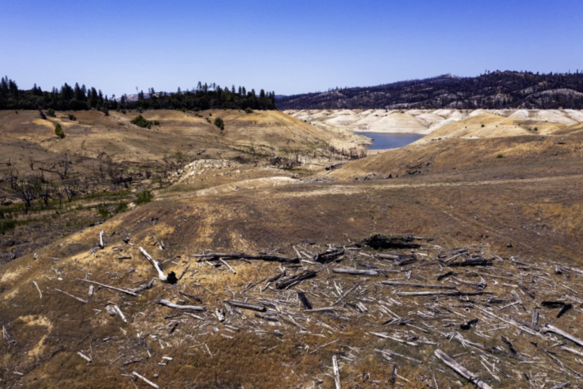 Downed trees once underwater are left exposed as water recedes in Lake Oroville.