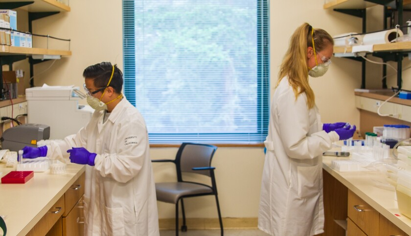 Research specialists Scott La and Anouk van den Bout work in the UCSC Molecular Diagnostic Lab.