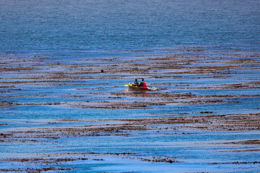 Two people kayak off the coast in Santa Cruz.