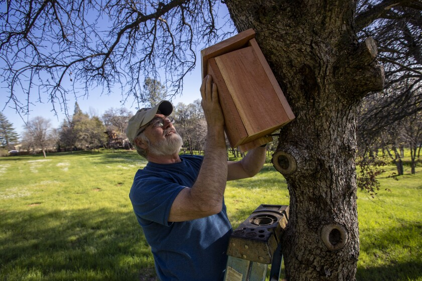 Steve Schwarzbach hangs a wooden birdhouse to the side of a tree