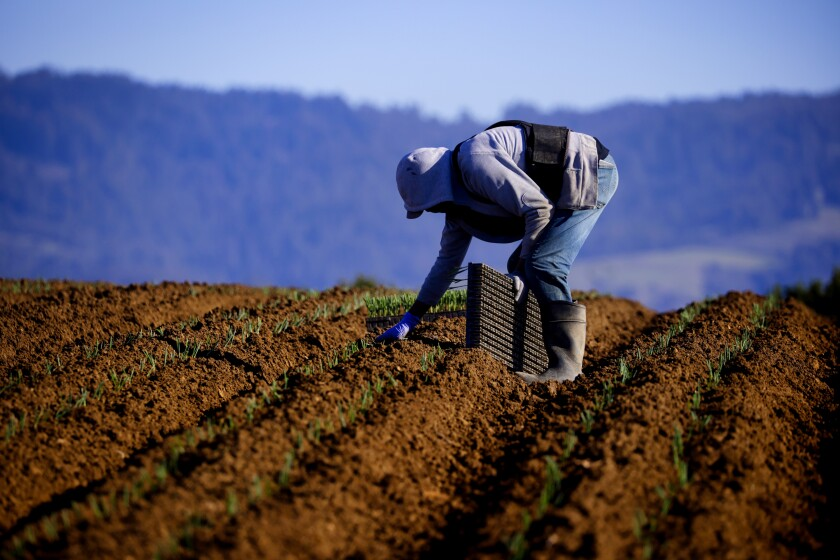 A farmworker in Watsonville.