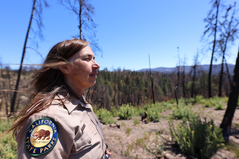Joanne Kerbavaz of California State Parks stands atop a hill between fire-damaged Knobcreek pines.