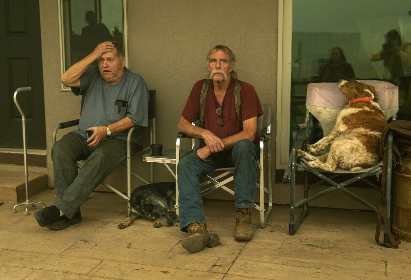 Two sitting men and two dogs.