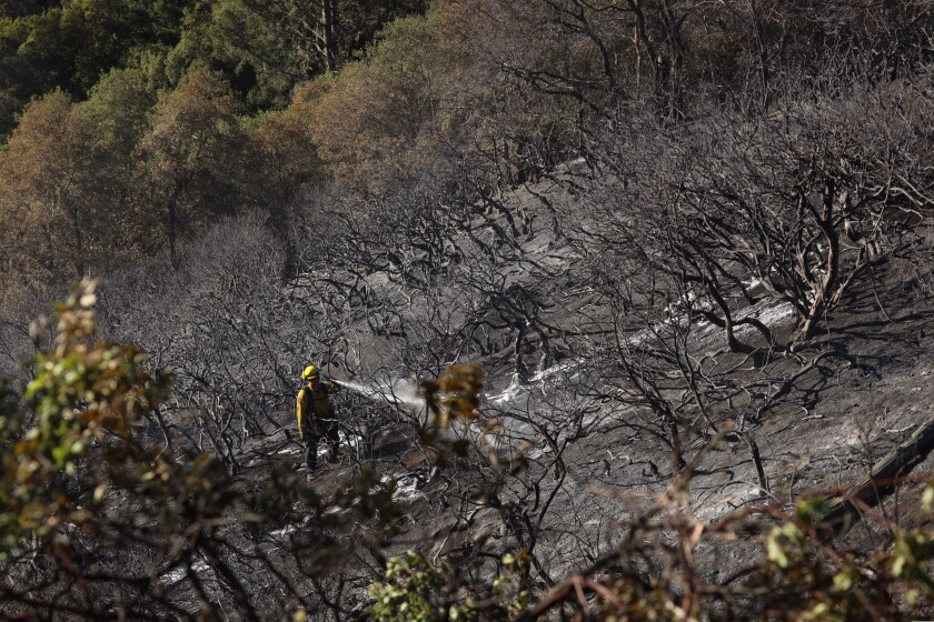 A member of Call fire cleaning up hot spots at the location of the Panther Fire