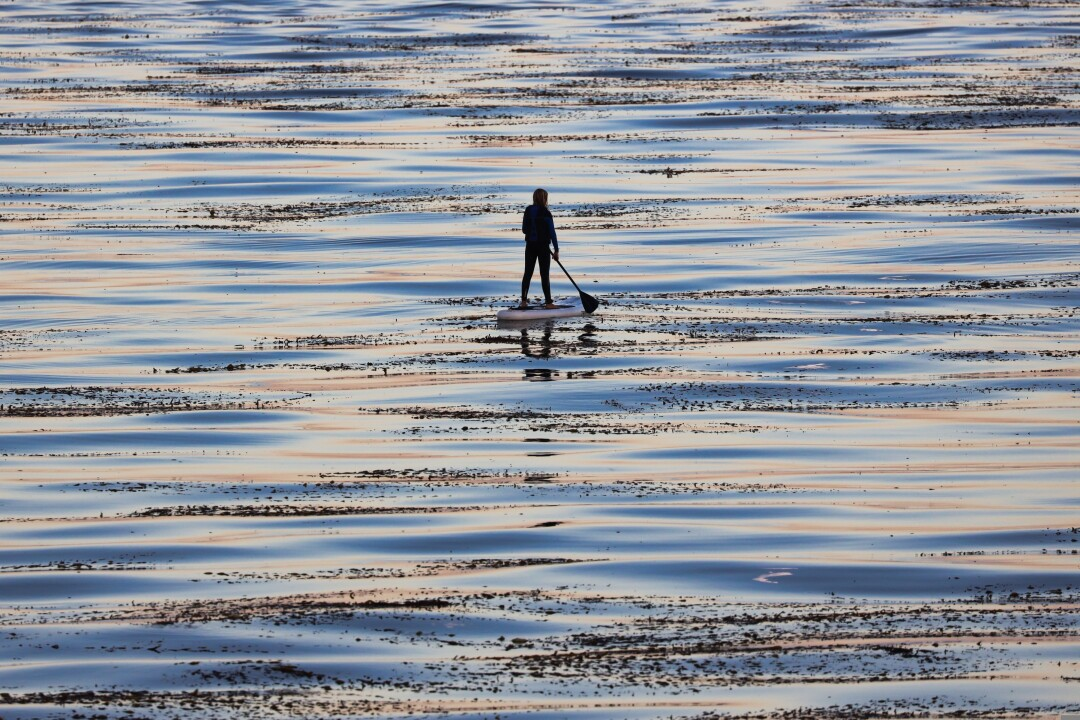 Stand-up paddler in the kelp beds at Steamer Lane