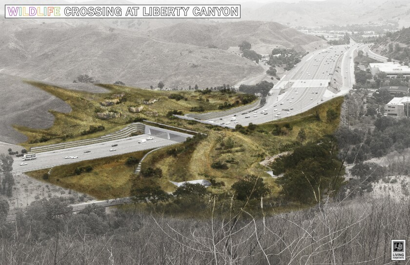 A rendering of the Liberty Canyon Wildlife Crossing, which could help keep mountain lions from extinction.