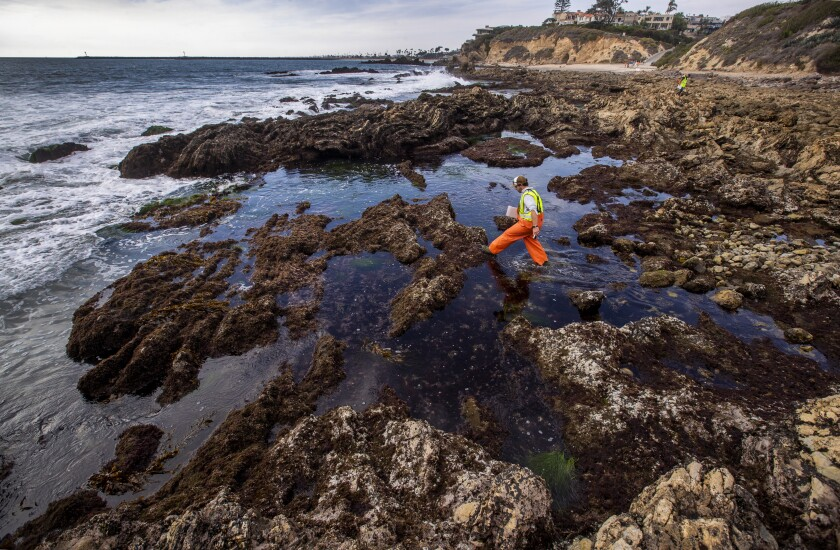 As the oil spill spreads, a team of biologists from the UC Santa Cruz assess the overall biological habitat