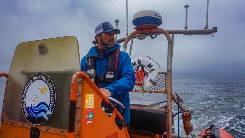 Ari Friedlaender scanning the horizon for whales on the final day of the spring sampling season.