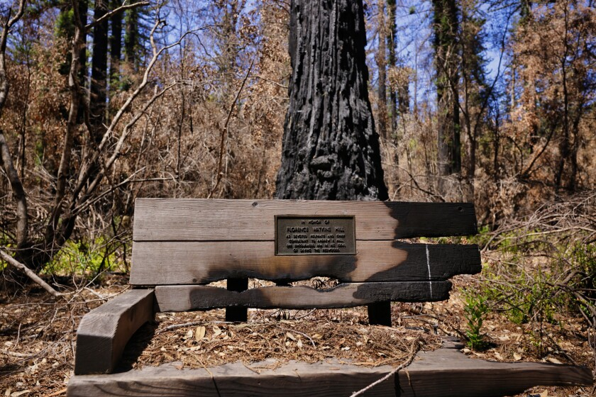 A fire-damaged park bench inside Big Basin State Park on Tuesday, August 10.