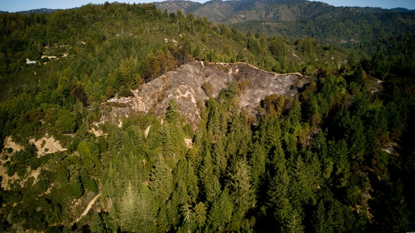 Drone shot of the Panther Fire in Boulder Creek.