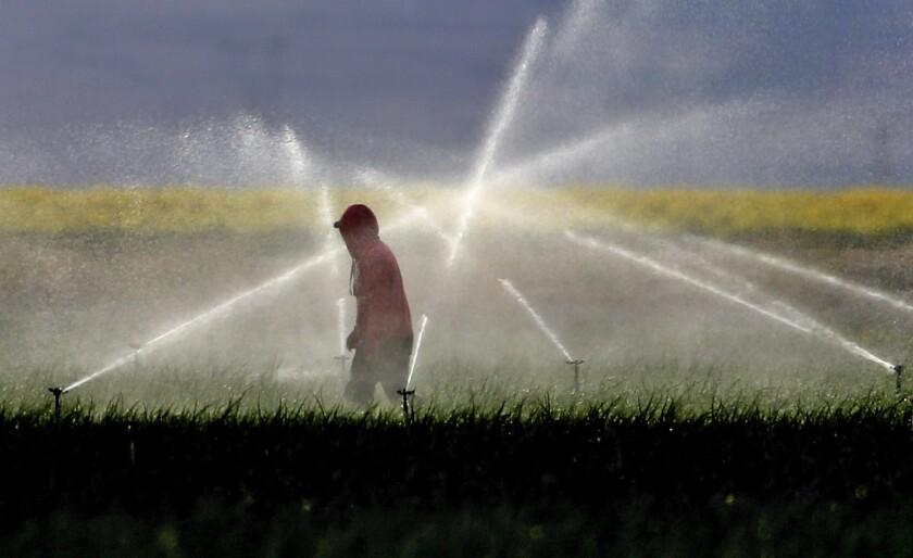 Farmworkers adjust sprinkler coverage south of Bakersfield.