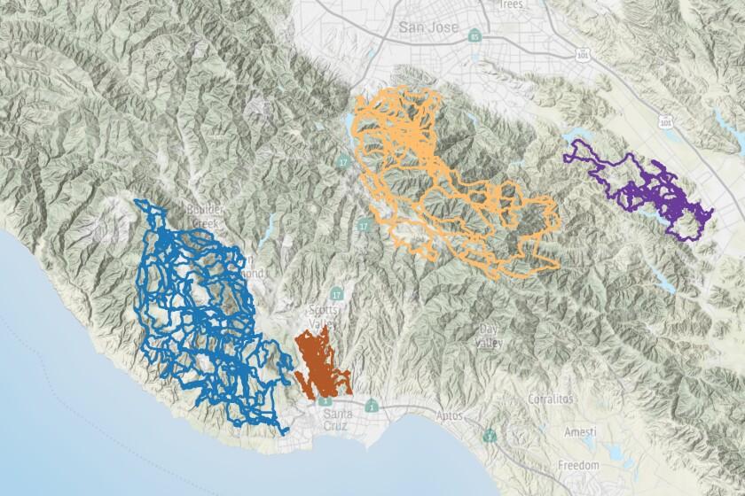 Tracking data for four pumas.