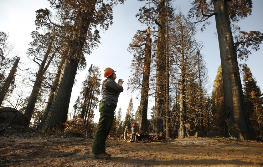 A person in a hard hat looks up at trees
