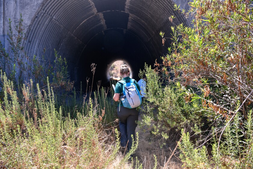 Ecologist Michelle Mariscal walks into the Harbor Boulevard Wildlife Underpass in La Habra Heights