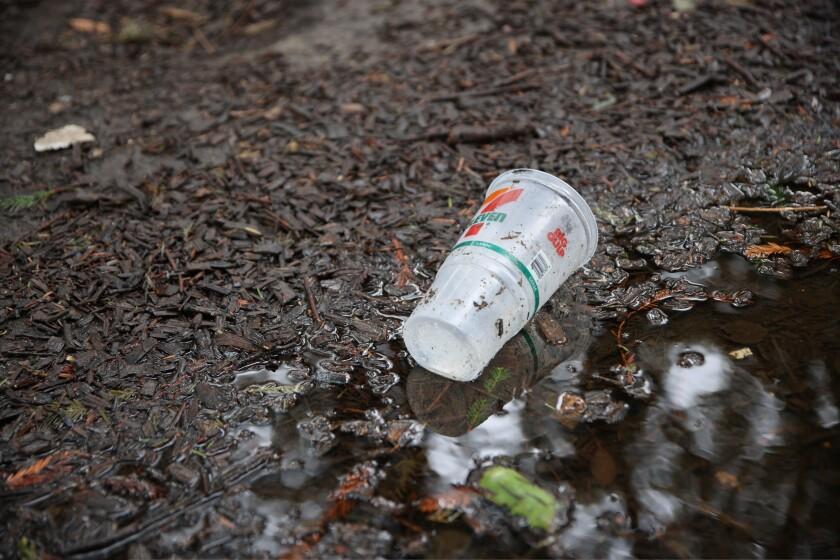 A plastic cup near San Lorenzo Park.