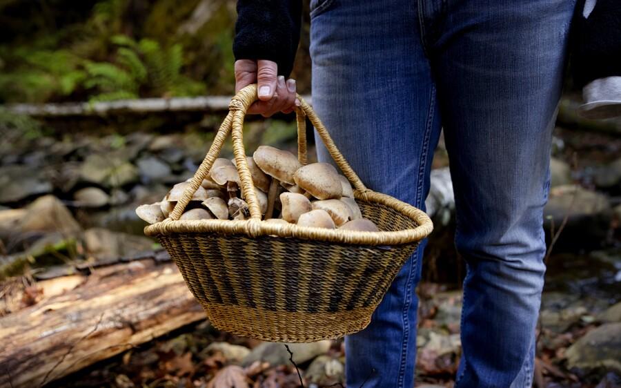 A local bounty of Boulder Creek mushrooms.