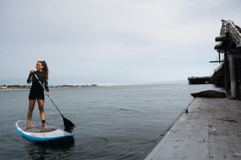 A trip around the wharf will likely involve a sea lion sighting or two.