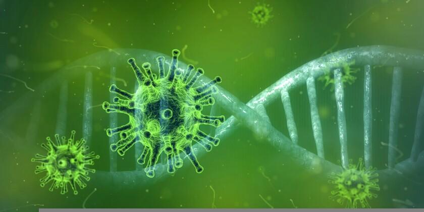 An artist's rendering of a coronavirus
