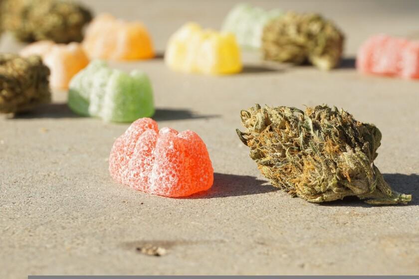 Cannabis gummie and a marijuana bud