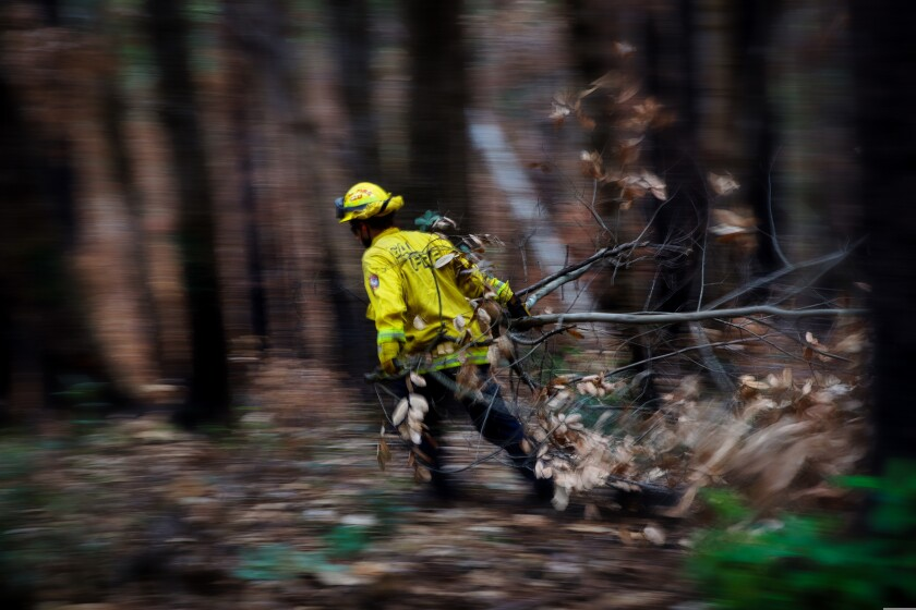 A Cal Fire crew member clears out brush, branches and other dead fuels.