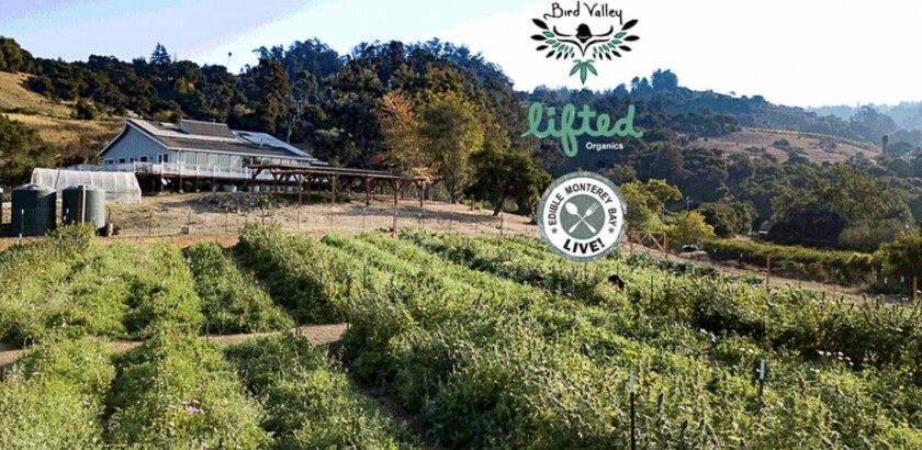 Regenerative Cannabis Farm Tour
