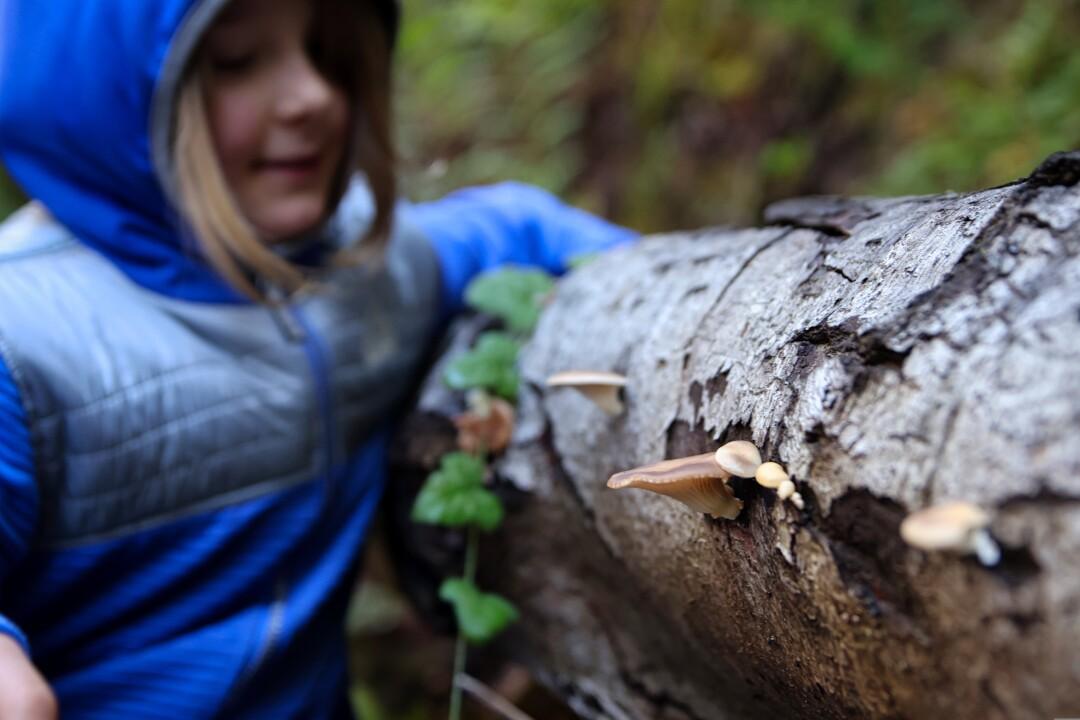Iris has a sharp mushroom eye for an 8-year-old.