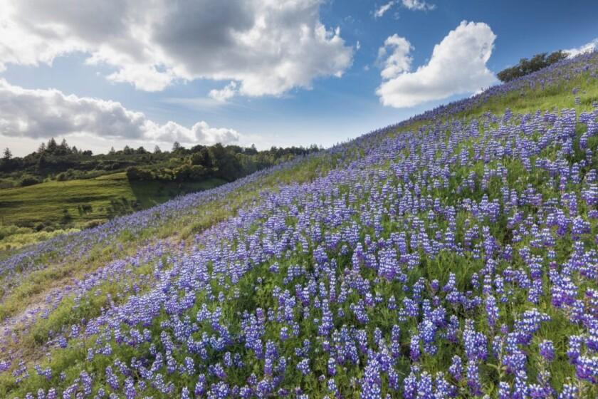 The Glenwood Preserve in Scotts Valley