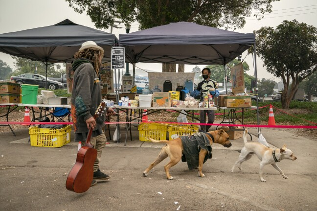 Dogs in front of the Food Not Bombs.
