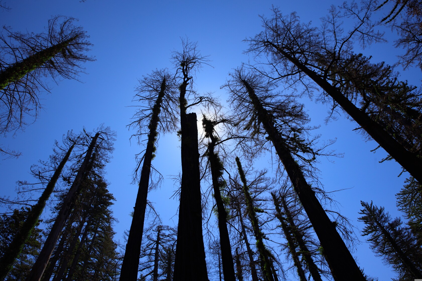 Inside Big Basin State Park on Tuesday, August 10.