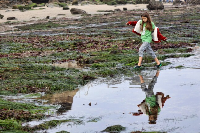 Tidepooling at low tide.