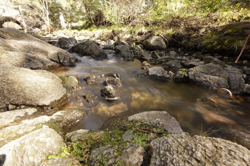 Carbonera Creek in Scotts Valley