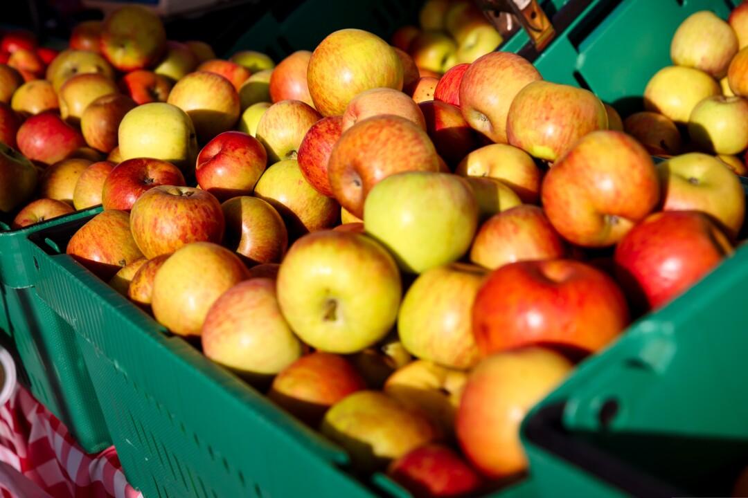 Fresh apples at Cabrillo.
