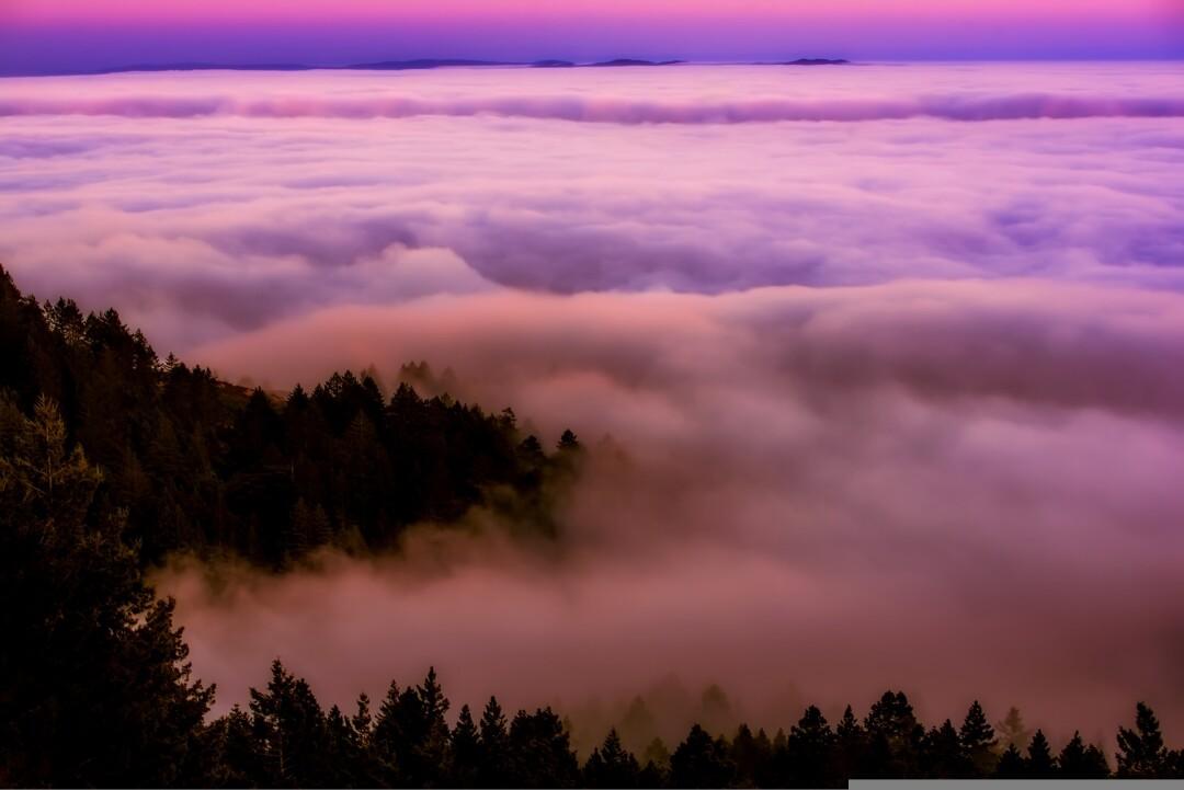 Fog rolls through a California forest