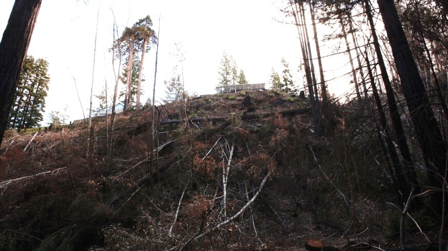 Trees and brush in the CZU Lightning Complex fire burn scar area of the Santa Cruz Mountains on Jan. 25, 2021.