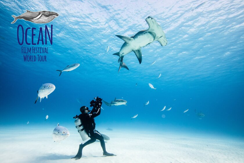 The Ocean Film Festival World Tour screens at the Rio on Tuesday, June 8, which is World Oceans Day.
