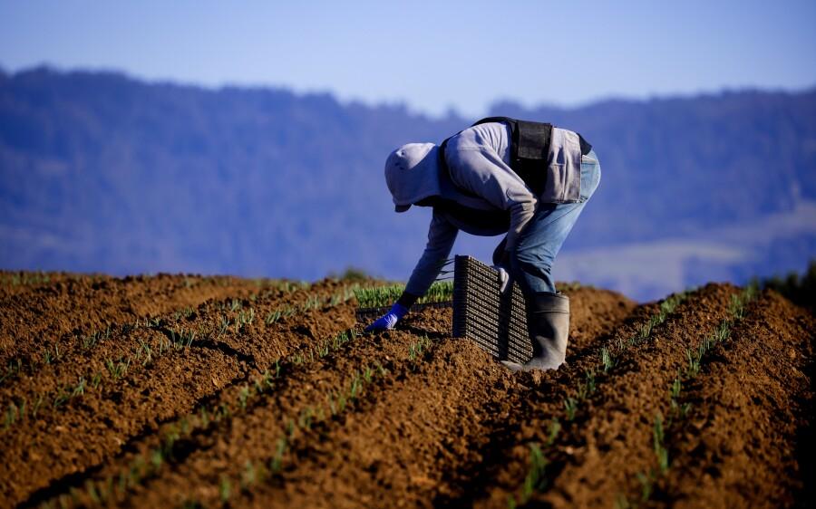 A farmworker in Watsonville.