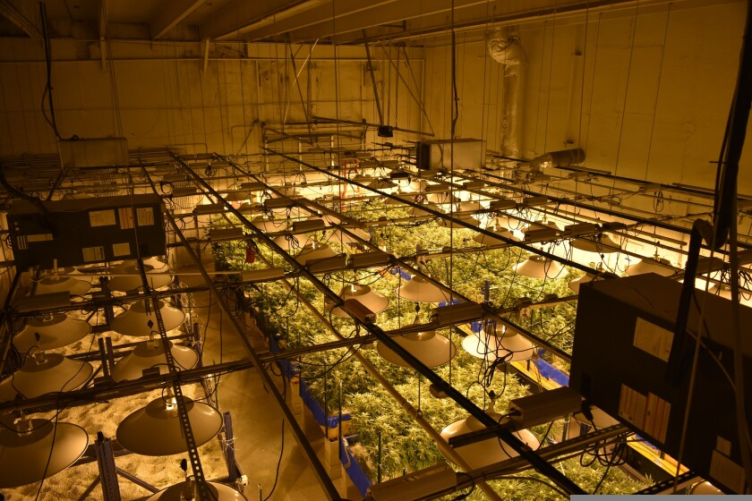 A marijuana growth facility.