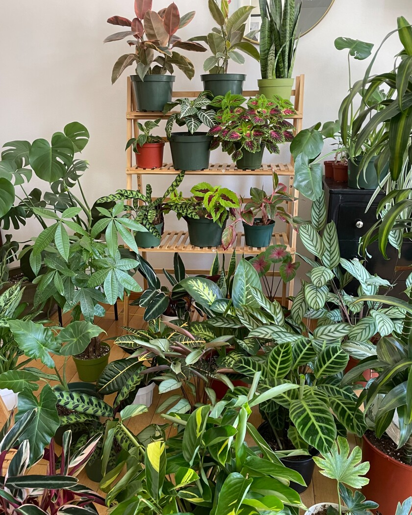Vertical photo of a room full of lush green plants